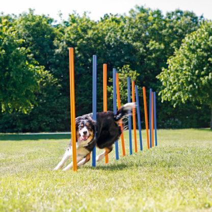 423206 trixie agility slalompinnar plast 12st 115cm 2
