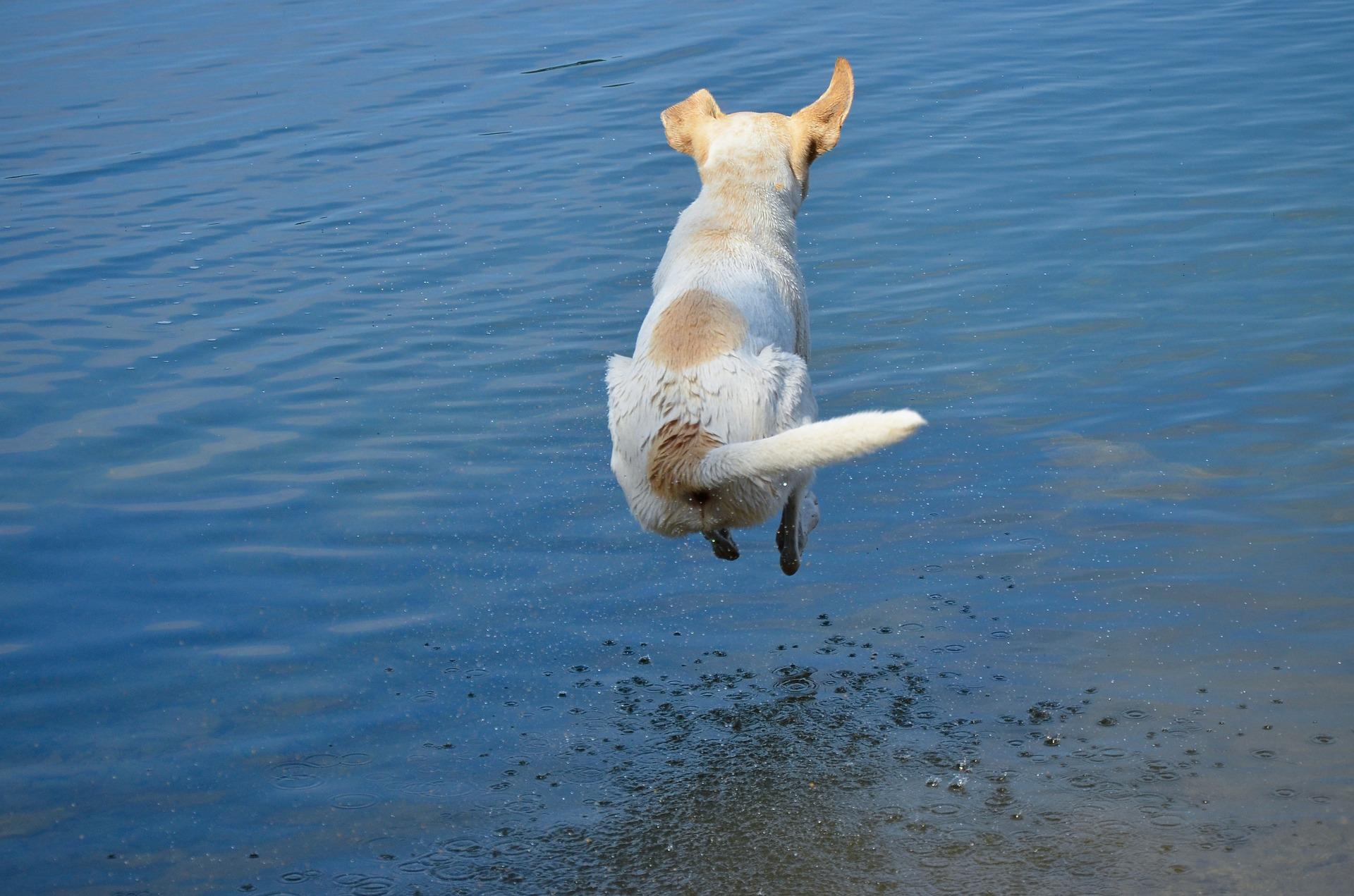 hund kanonkula