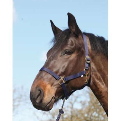41212014 horse guard grimma navy