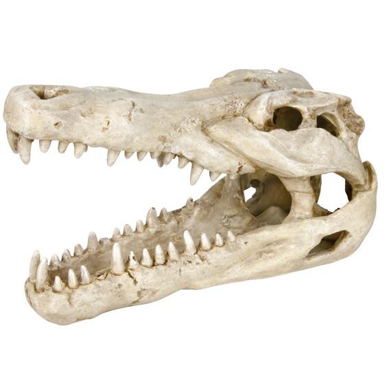 Dekoration Krokodilkranie 14cm
