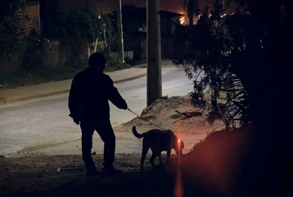 dog walking reflective